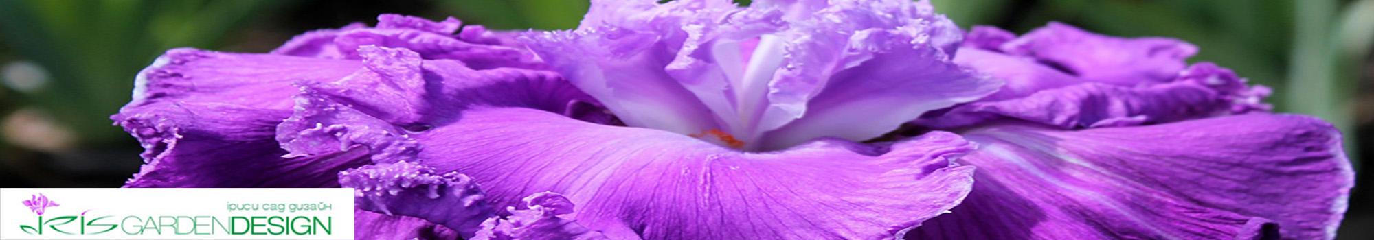 Iris.in.ua